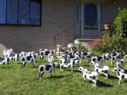 cow lawn ornament